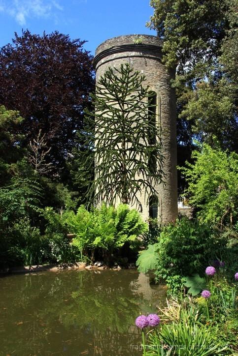 Parc Emmanuel Liais, tour observatoire