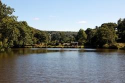 Quiétude autour de l'étang