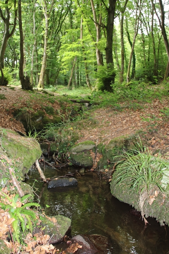 Bois de Maupertus