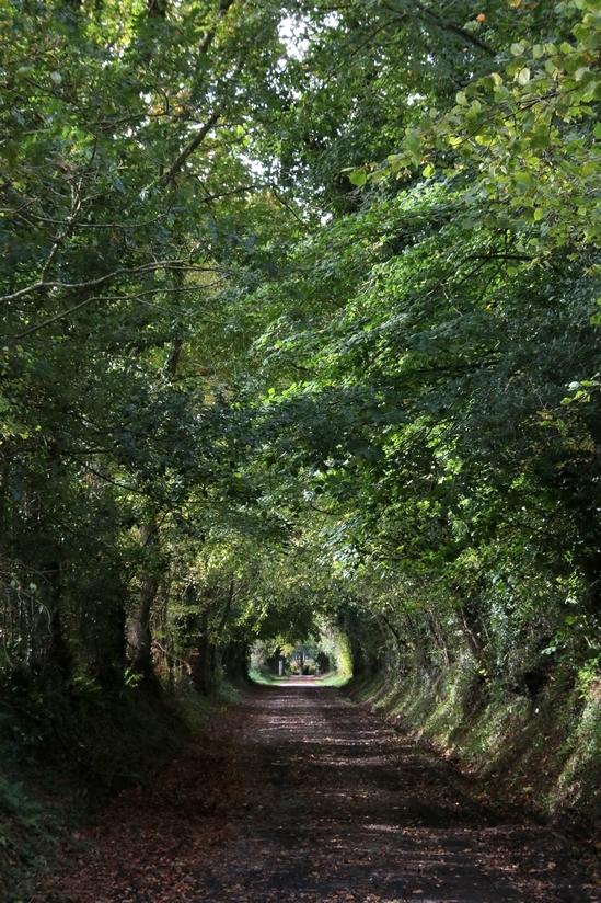 Tunnel végétal