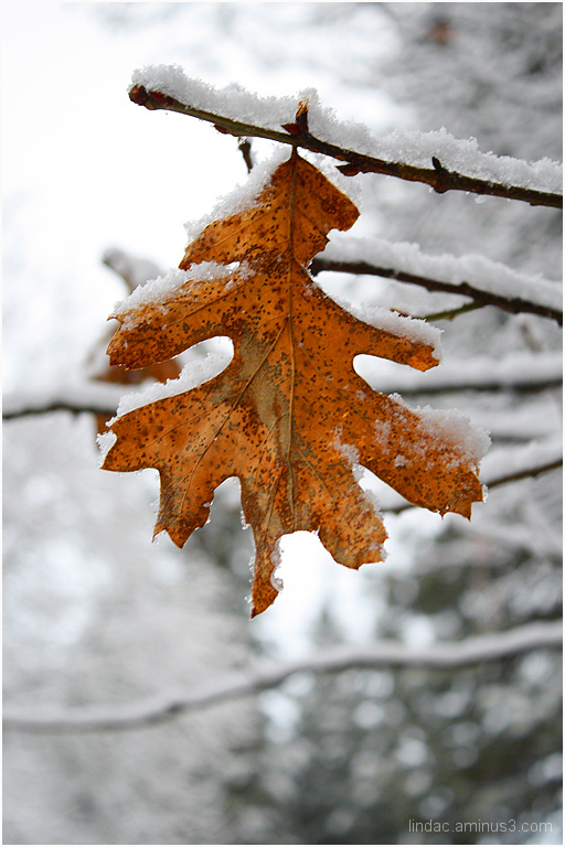Cold Leaf, Yosemite National Park