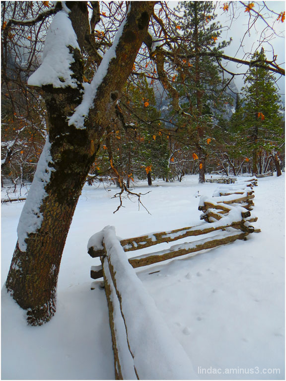 First Winter Snow in Yosemite