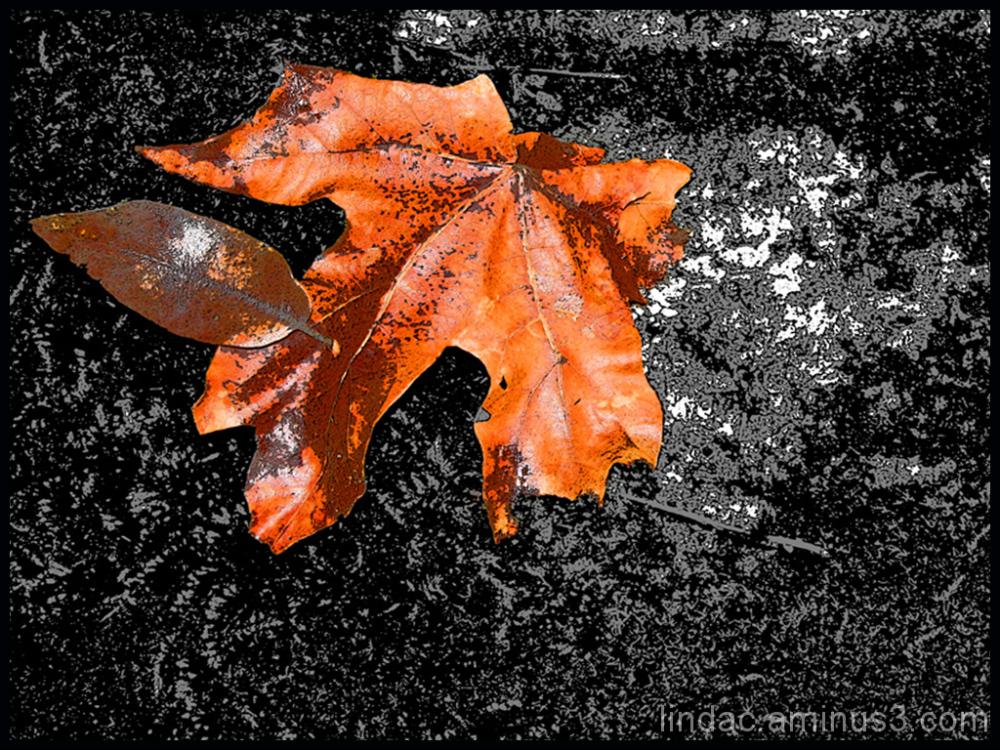 Fall Leaf B&W&Color
