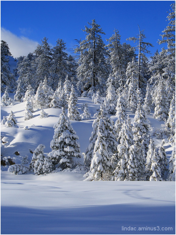 Majestic Snow Day, South Lake Tahoe