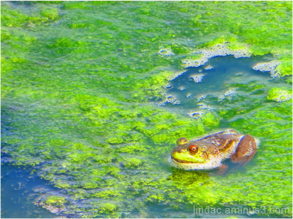 Frog Setting on Lake Moss