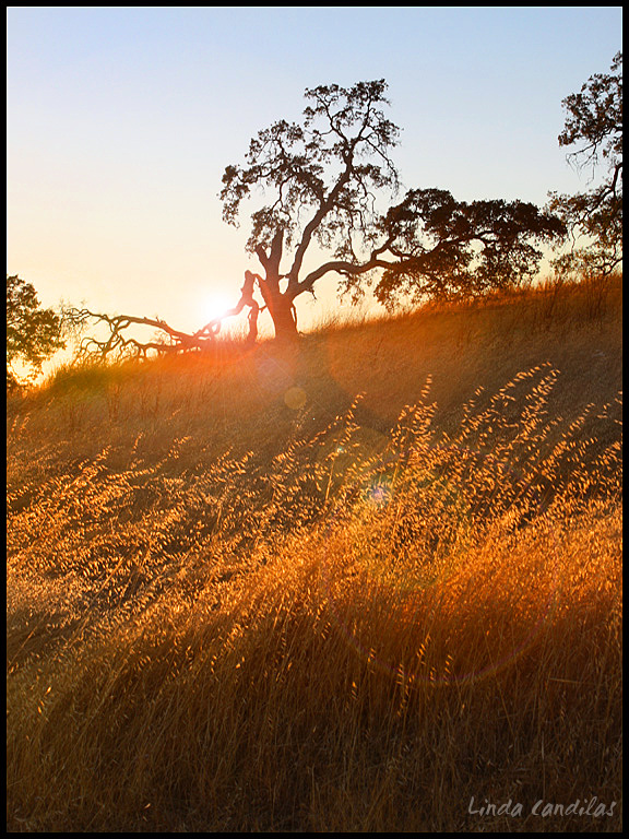El Dorado Hills, Sunflares