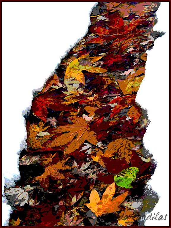 A Stream of Autumn Leaves