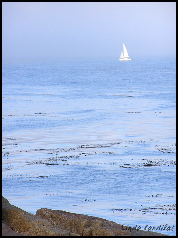 Sail at Sea, San Francisco Bay