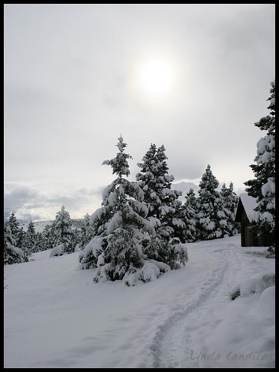 Montana Sun Shining