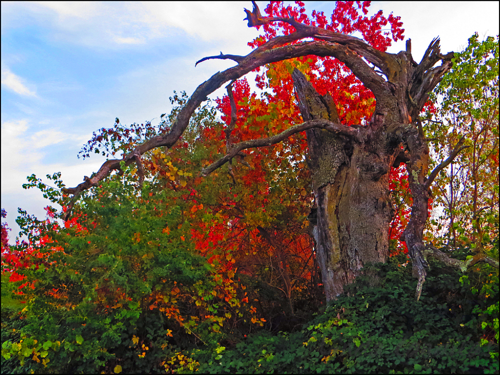 A Crooked Tree