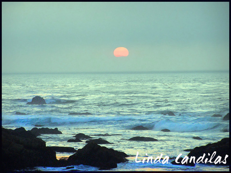 Monterey Rocky Shore