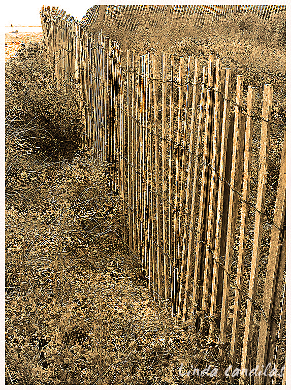 Fence at the Beach 2