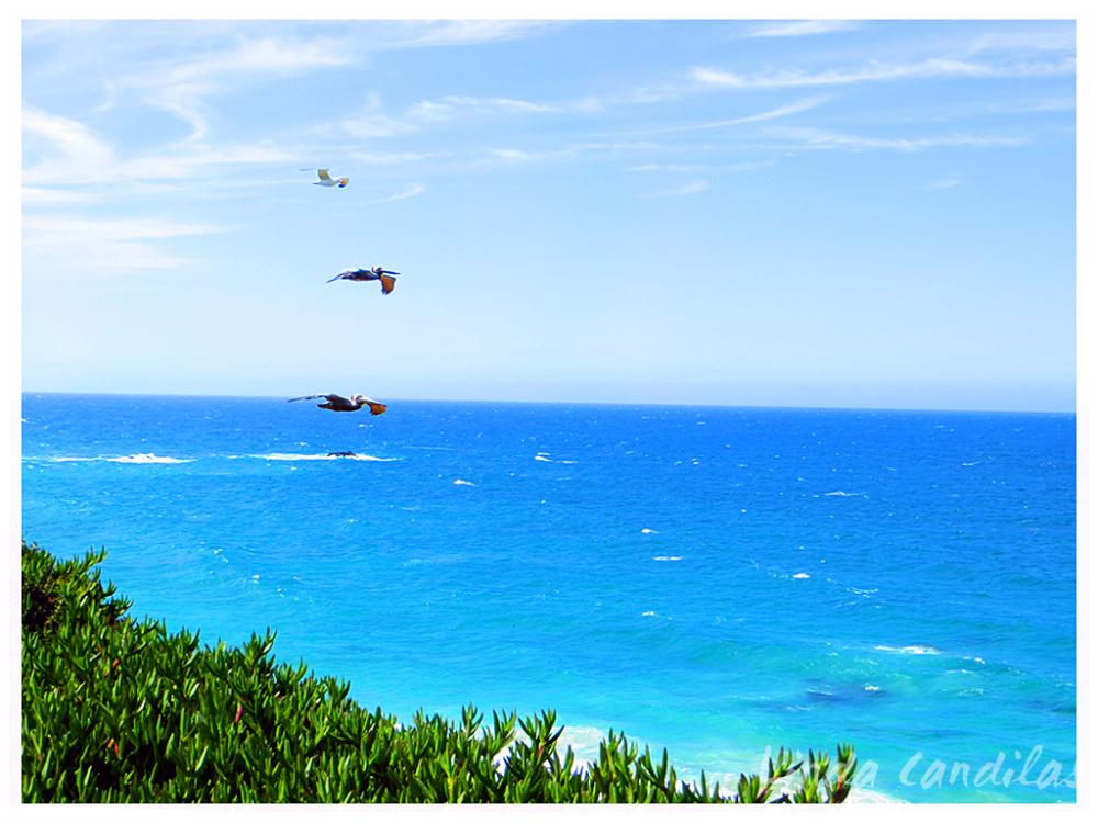 Big Sur Sea Gulls