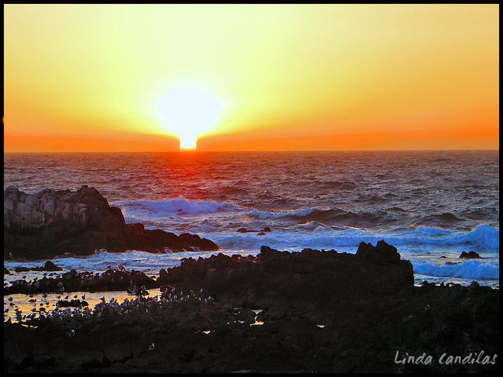 Monterey Peninsula, Pacific Grove