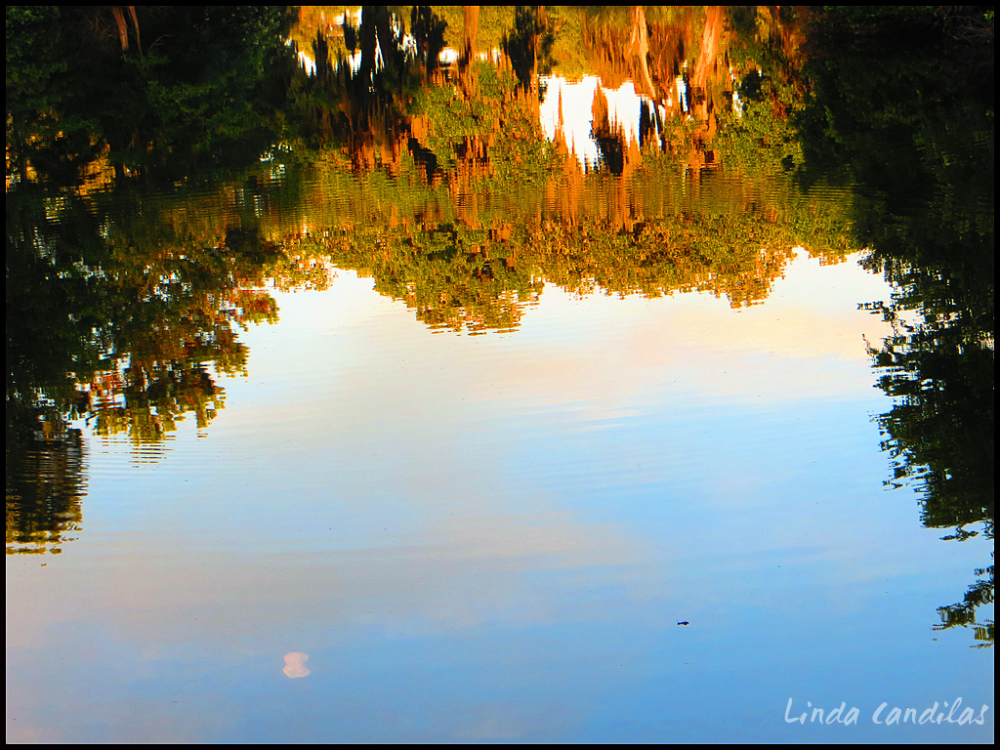 Forida Reflections and Baby Alligator