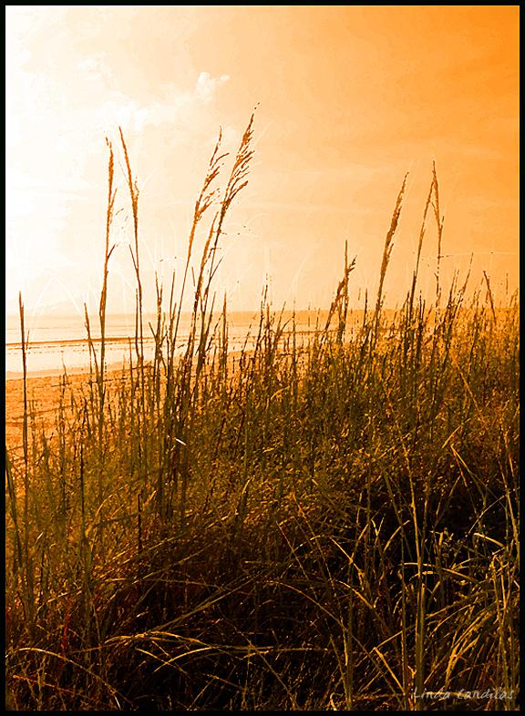 Florida Seagrass