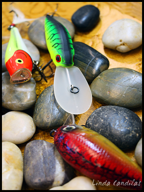 Fish & Hooks