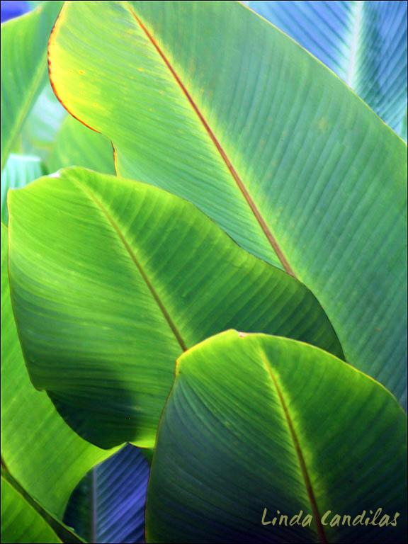 Hawaii Palm Tree