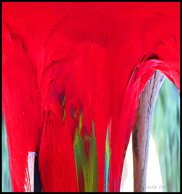 Parrot Abstract