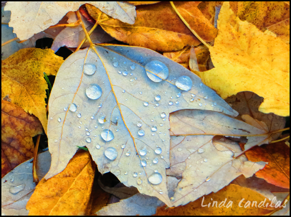 Rain Drops on Autumn Leaf