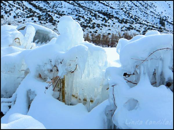 Frozen Trees of Ice