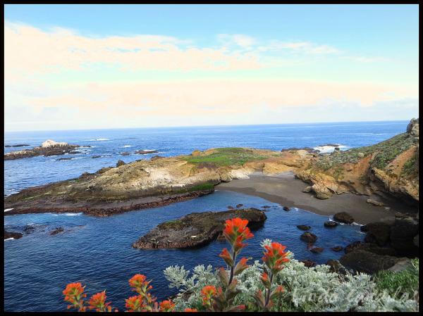 Wild Plants and Harbor Seals, Point Lobos