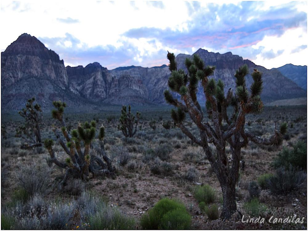 Red Rock Canyon Joshua Tree