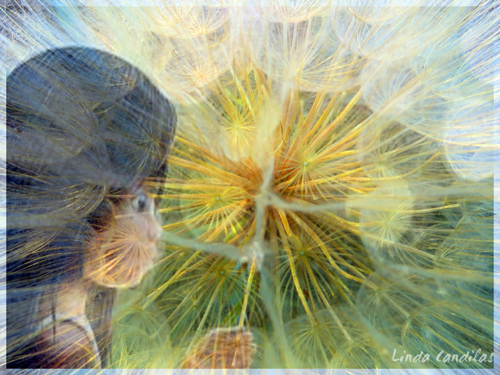 Dandelion Reflection of a Child