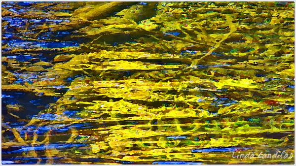 Autumn Moss Under Flowing Water