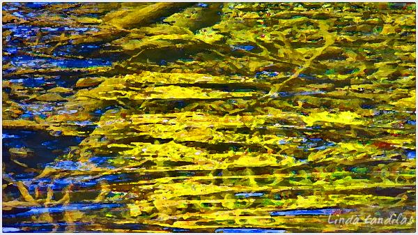 Autumn Moss Under Flowing Water
