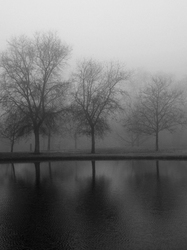 Fog and Winter Go Togather