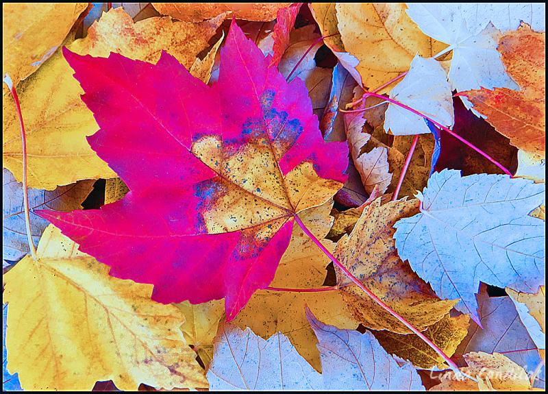 Autumn in Cameron Park 2