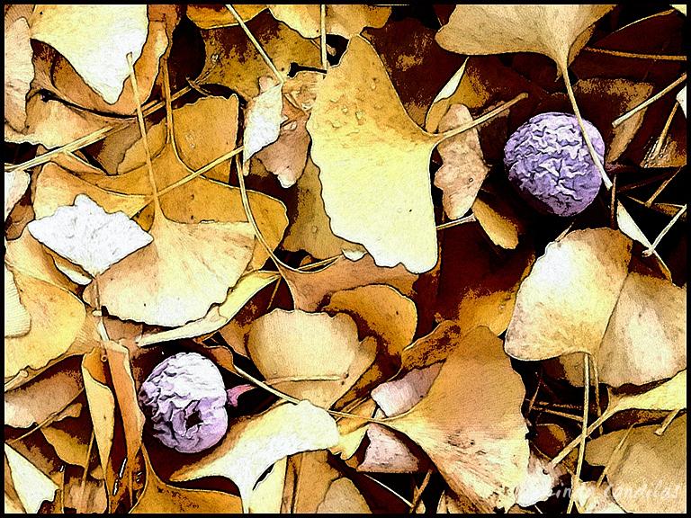 Autumn in Cameron Park