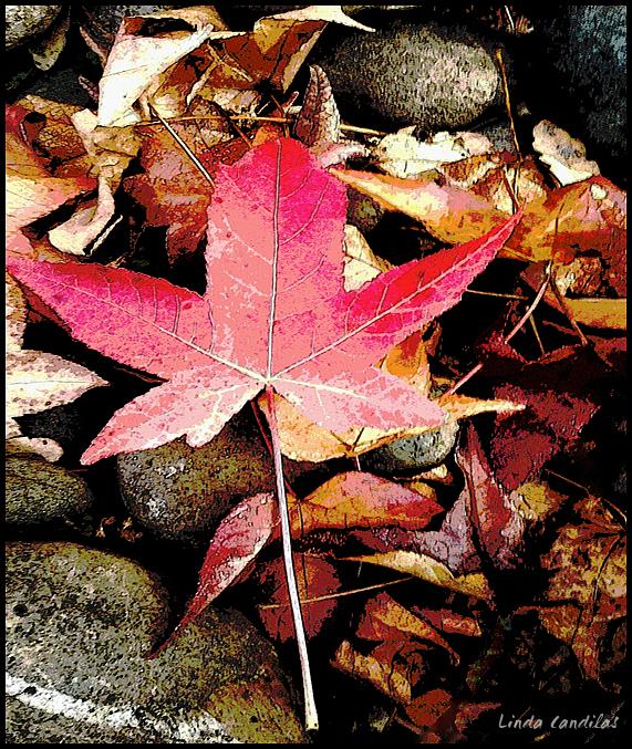 Autumn in Cameron Park 5