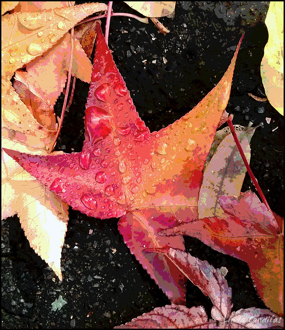 Droplets on Autumn Leaves