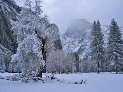 Frosted Yosemite