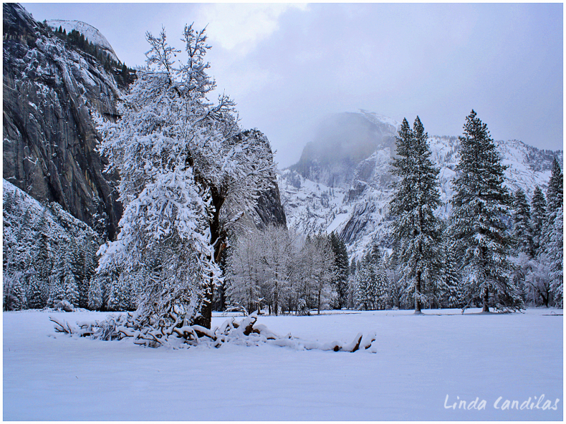Frosted Tree and Half Dome