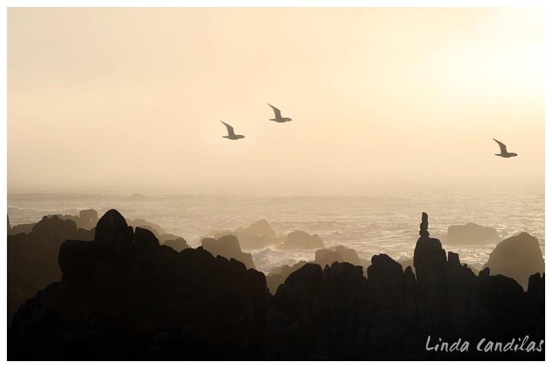 Asilomar State Beach, Pacific Grove, Monterey