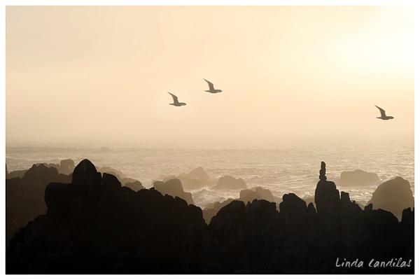 SeaGulls in the Fog