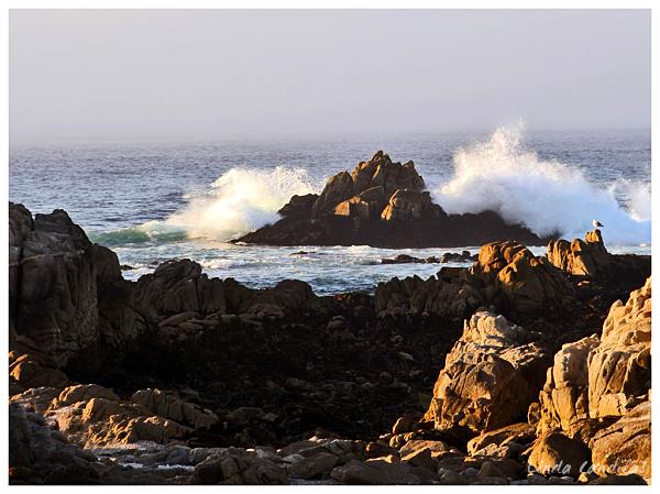 Asilomar State Beach Surf, Monterey