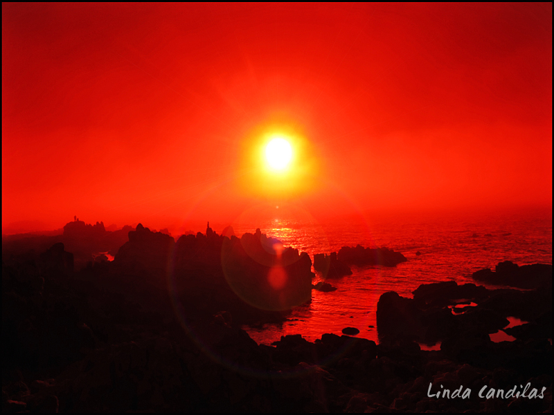 Monterey Red Sunflare