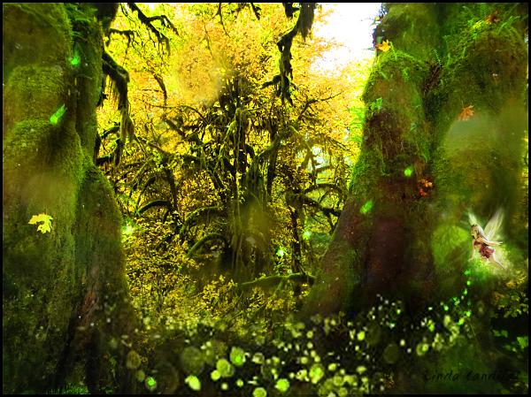 Hoh Rain Forest, Fairys