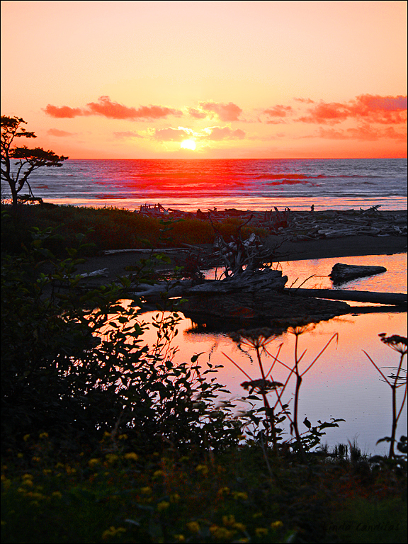 Kalaloch Beach Sunset