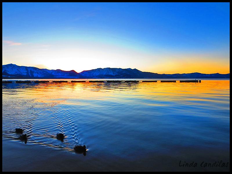 Ducks South Lake Tahoe