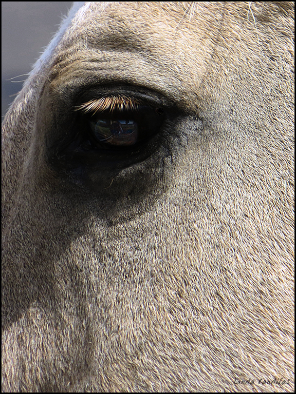 Refections in a Horses Eyes