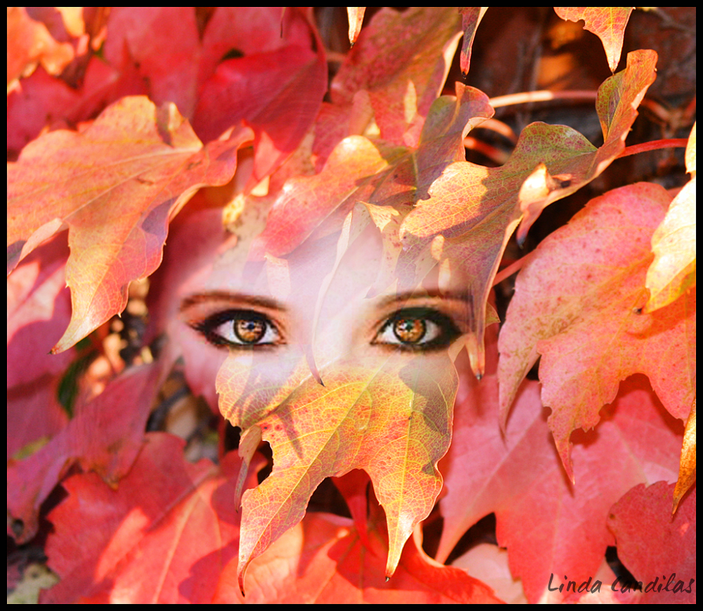 The eyes of Autumn