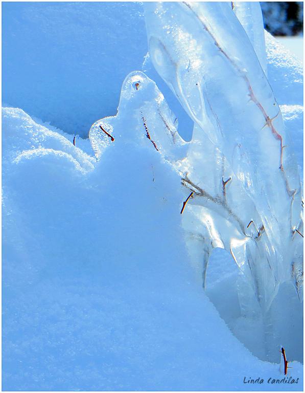 Frozen Branch's