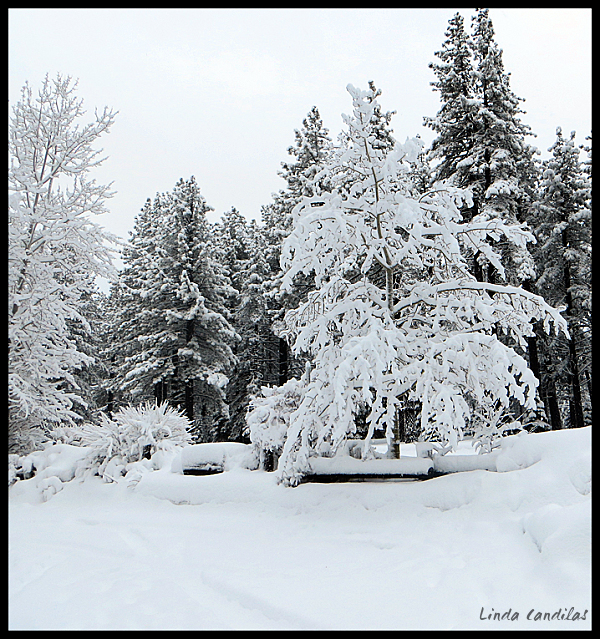 A Little Snow, Pollock Pines, CA