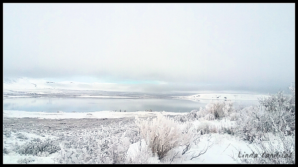 Frosted Sagebrush, Mono Lake