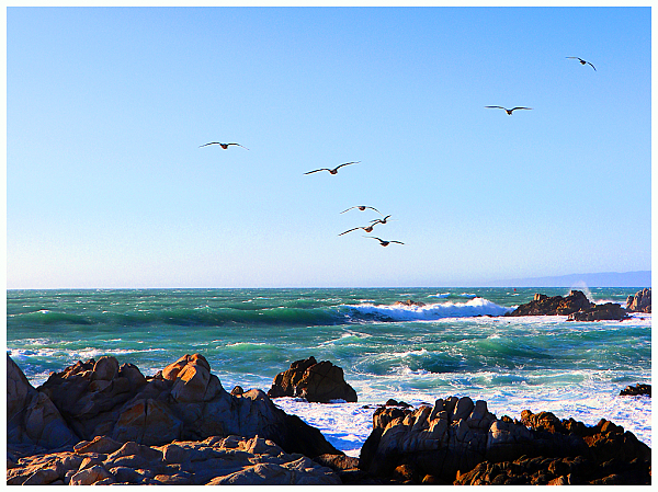 Seagulls Coasting On The Wind